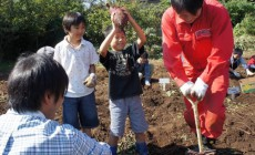 神奈川の里山シェアで芋掘り