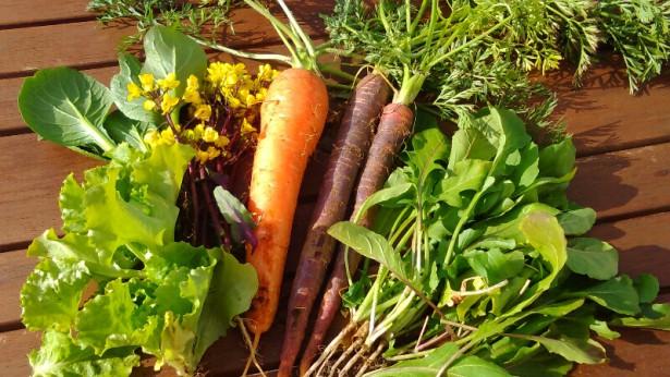 収穫体験野菜